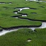 drone-marsh-view_400x400.jpg