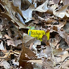 watch rock milkweed 051521.jpg