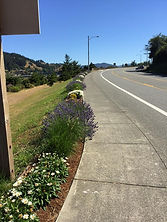 Newly replanted flower beds at Port of Gold Beach entrance.