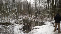 zima w Kampinosie