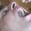 Thumbnail: Trapped InsideTyler's Mouth