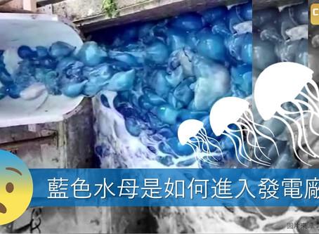 藍色水母是如何進入發電廠?