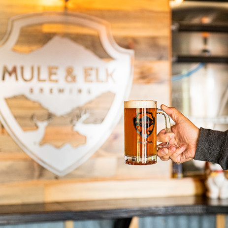 Mule and Elk in Cle Elum