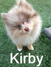 kirby_edited.jpg