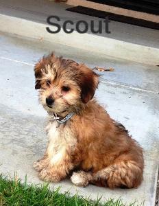 scout-232x300_edited.jpg