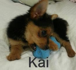 KaiOFCarliANDTate-262x240_edited.jpg