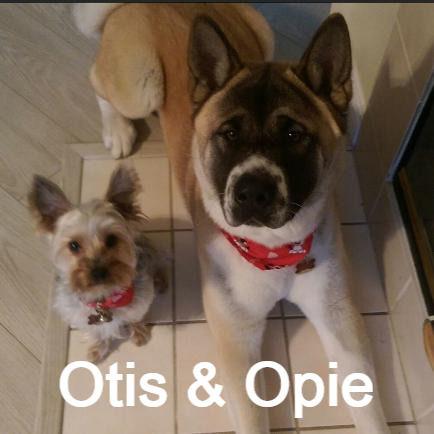 otis_and_kirby-434x434_edited.jpg