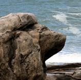Pedra com cara de leão.jpg