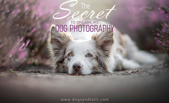 Dreamlike dog photography heidesRGB .jpg