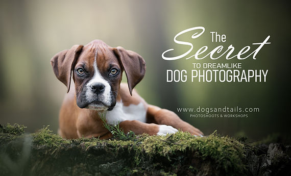 Dreamlike dog photography - private WS.j