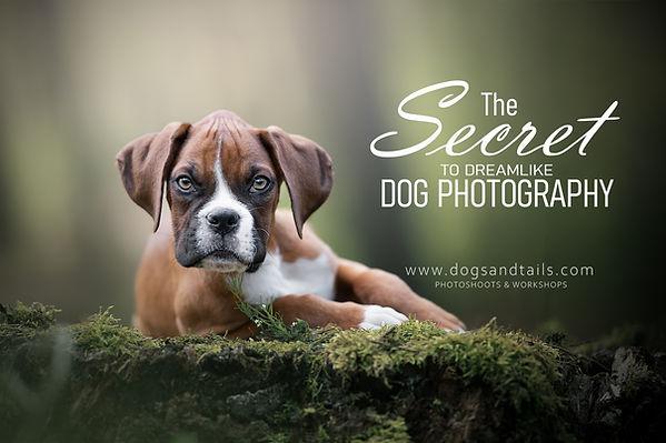 Dreamlike dog photography - private WS.j
