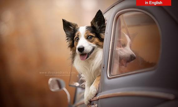 © Dogs and Tails Pet Photography