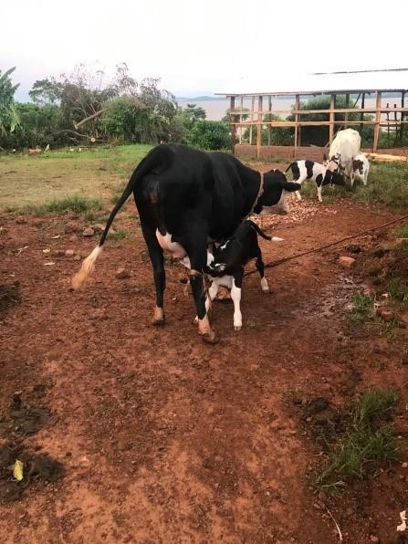 3 Kuh mit Kalb.jpg
