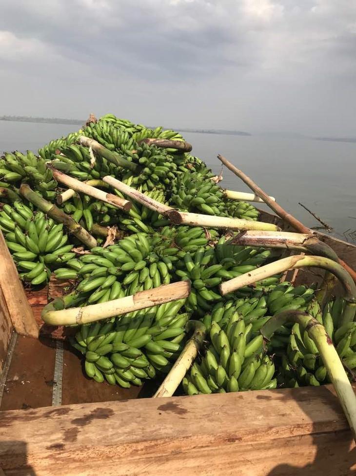 10 Bananenbaum.jpg