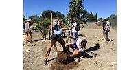 plantation-arbre.jpg