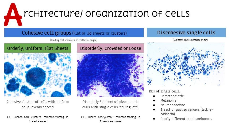 Architecture/Organization