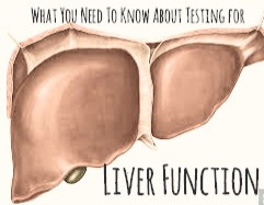 Liver Function Tests: An Overview