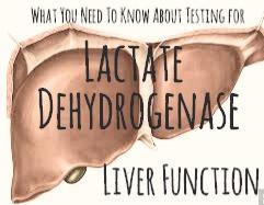 Liver Function Tests: Lactate Dehydrogenase