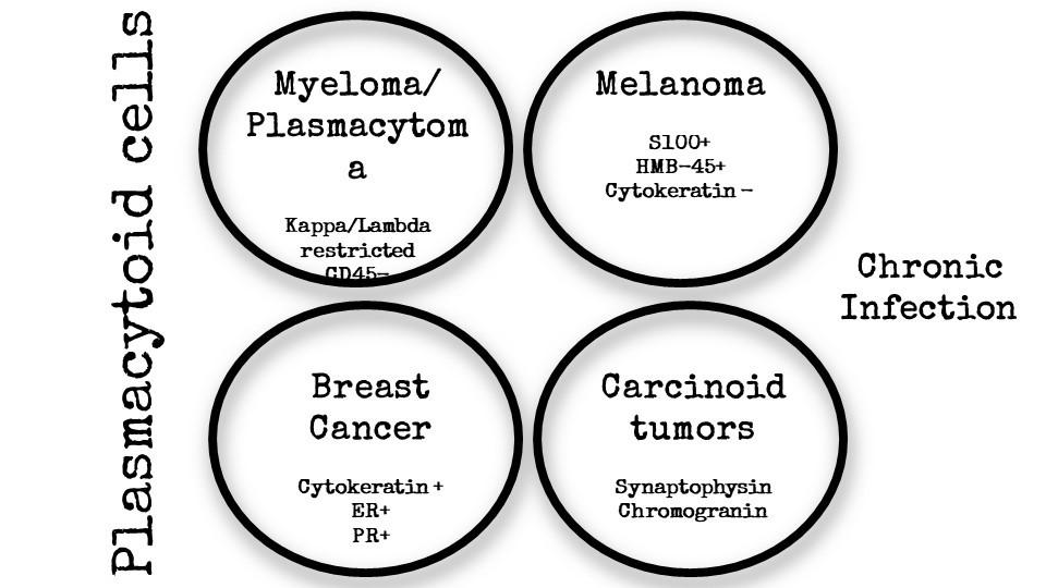 DDx: Plasmacytoid cells