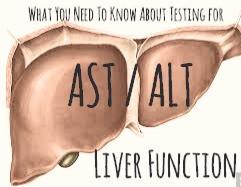 Liver Function Tests: AST/ALT