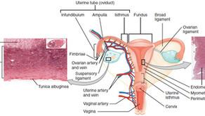 A Sneak Peek into the NEW GYN Tract Pathology Tutorials!