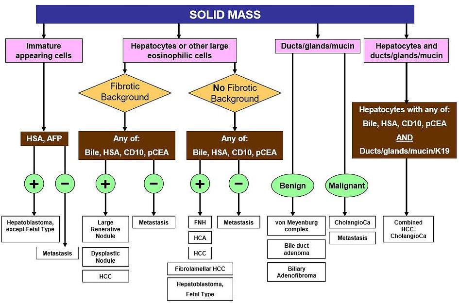 DDx Solid liver mass.JPG