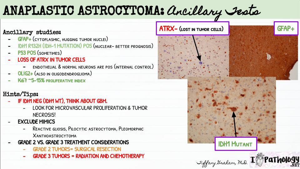 NeuroPathology (25)