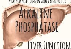 Liver Function Tests: Alkaline Phosphatase (Alk Phos)