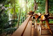 Rainforest Cottage.png
