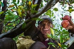 agriculture-apple-farm-3019836.jpg
