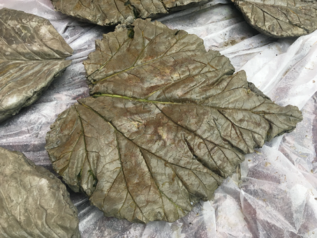 DIY Stepping Stones with Rhubarb Leaves