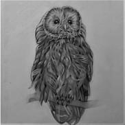 owl_edited.jpg