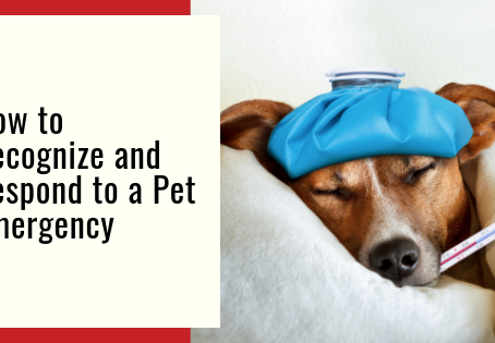 How to Recognize and Respond to a Pet Emergency