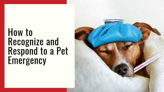 "360 Pet Cab blog article ""How to Recognize and Respond to a Pet Emergency"""