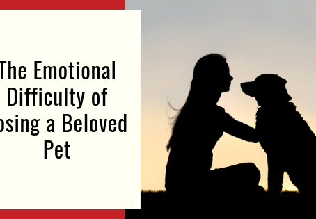 The Emotional Difficulty of Losing a Beloved​​ Pet
