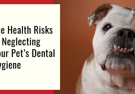 The Health Risks of Neglecting Your Pet's Dental Hygiene
