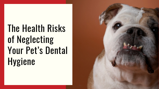 "360 Pet Cab blog article ""The Health Risks of Neglecting Your Pet's Dental Hygiene"""