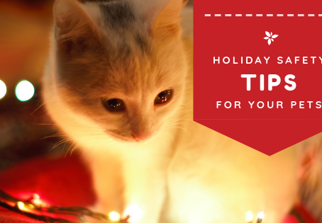 Holiday Safety Tips for the Pets in Your Home​