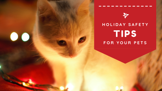 "360 Pet Cab blog article ""Holiday Safety Tips for your Pets"""