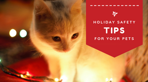 """360 Pet Cab blog article """"Holiday Safety Tips for your Pets"""""""