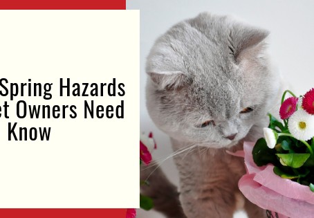 5 Spring Hazards Pet Owners Need To Know