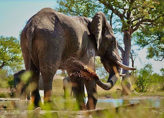 Elephant enjoing water.jpeg