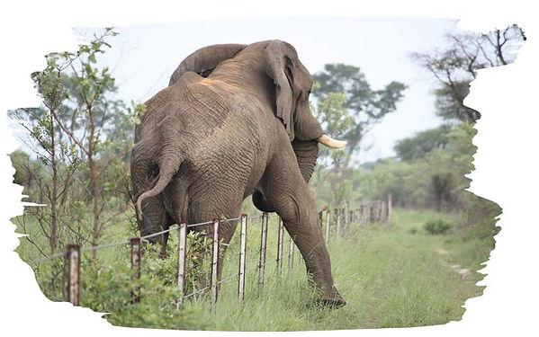 elephant_3.jpg