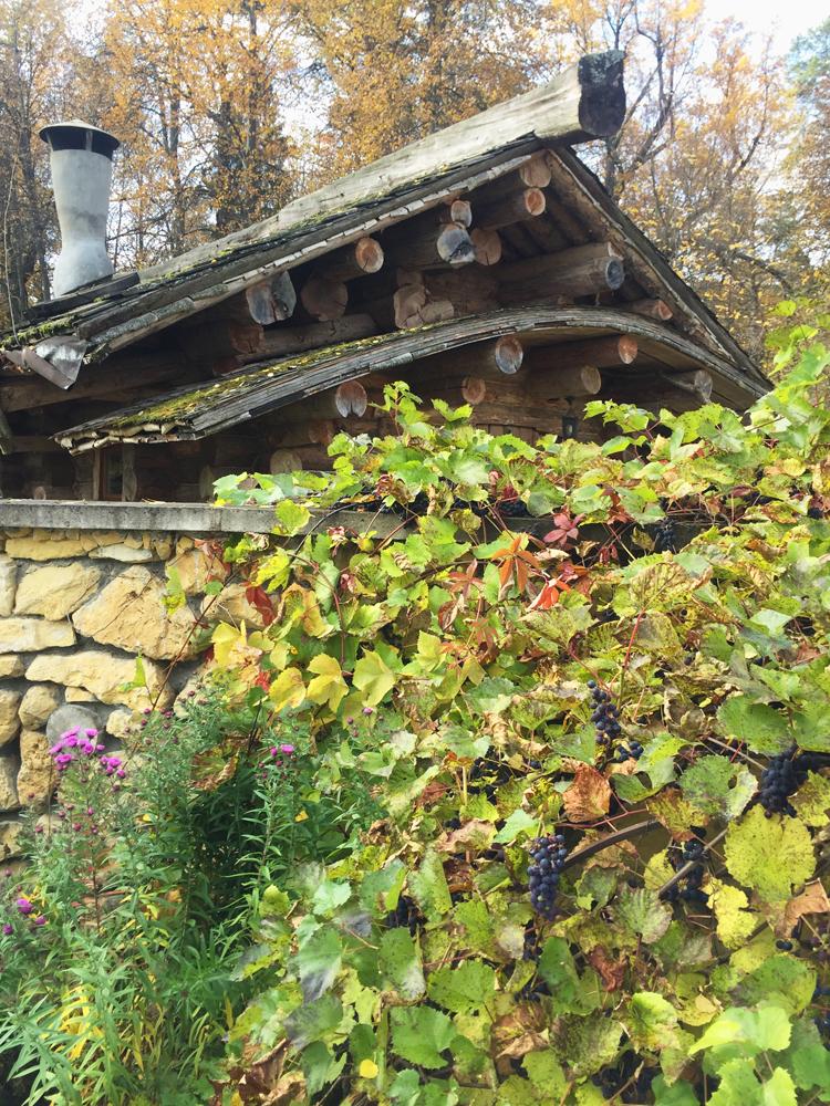 Виноградник перед Омшаником