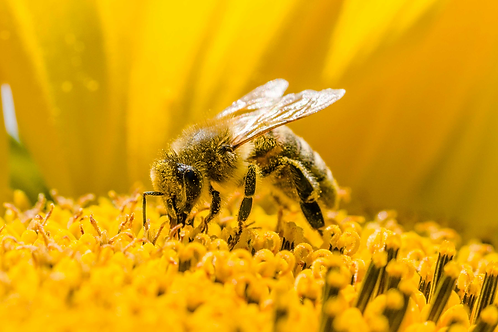 Apiary Lease Agreement