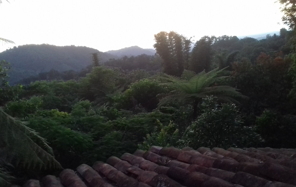 vista desde la terrasa