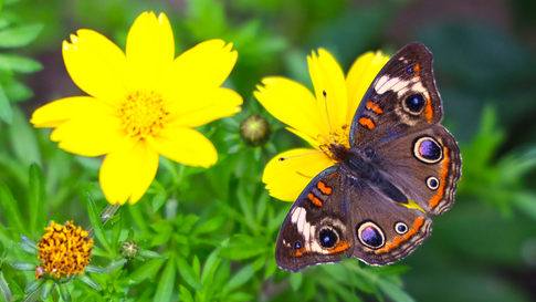 butterfly yellow flowers.png