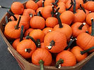 bin of feild trip pumpkins.jpg