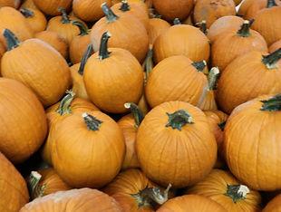 face pumpkins.JPG