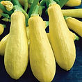 yellow squash.jpg